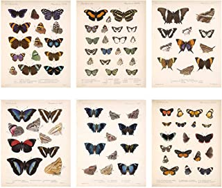 Best scientific butterfly poster Reviews