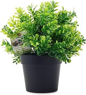 ikea sage plant