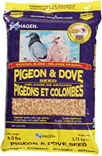 food of pigeon
