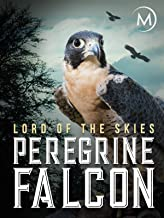 Best peregrine falcon documentary Reviews