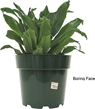 30 Watt   Face Plant   Novelty Planter Holds Plants, Glasses & You Can Draw On It. Elegant Ceramic Vase for Succulents, C