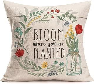 Best cotton flower quotes Reviews