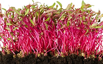 Detroit Dark Red Beet Microgreens Seeds, 100+ Premium Heirloom Seeds, 90% Germination, Highest Quality, Add Microgreens to Salads!, (Isla's Garden Seeds), Non GMO Organic, Highest Quality Seeds