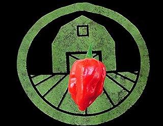 15 Red Savina Habanero-Pfeffer-Samen Chili, Chili Hotter als Scotch Bonnet