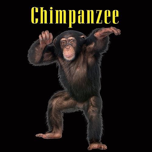 Chimpanzee by Chimpanzee Sounds on Amazon Music - Amazon com