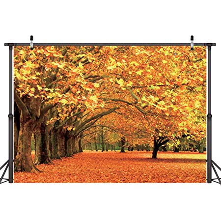 6x4ft Vinyl Maple Leaf Path Background Beautiful Maple Leaf for Tourism Children and Adults Photo Photography Background Film Photography Background LYLS985 for Party Decoration Birthday YouTube Video
