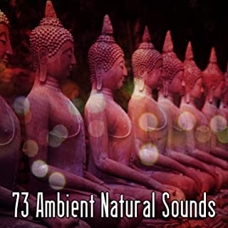 73 Ambient Natural Sounds