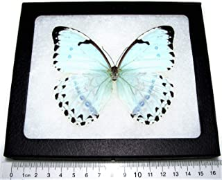 Best real butterfly framed wall art Reviews