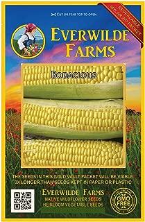 Everwilde Farms - 100 Bodacious Hybrid Sweet Corn Seeds - Gold Vault Jumbo