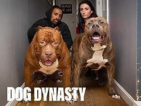 Dog Dynasty