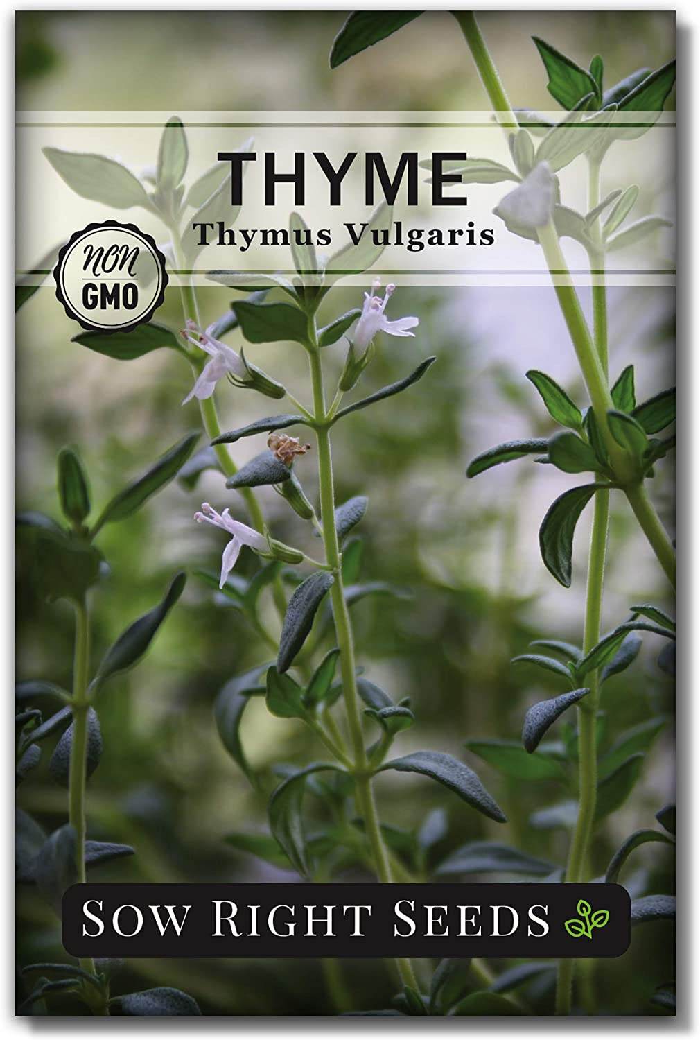 San Diego Mall Sow Right Seeds - Thyme Ranking TOP14 Seed Non-GMO All Planting for Heirloom