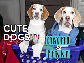 Cute Dogs Maymo & Penny