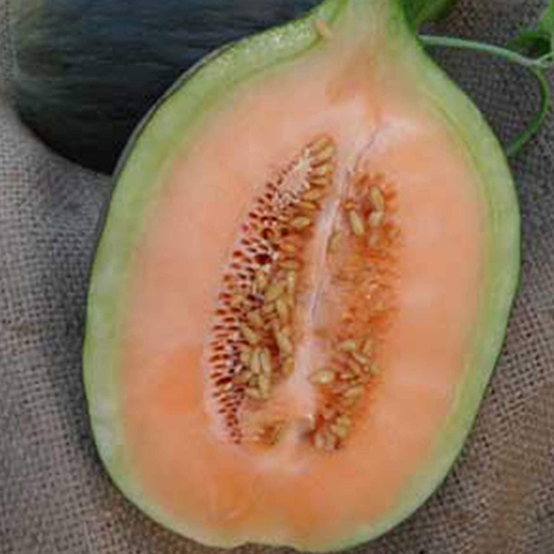 HEIRLOOM ORGANIC ROCKY FORD GREEN FLESH MELON 1 G ~30 SEEDS NON-GMO GARDEN