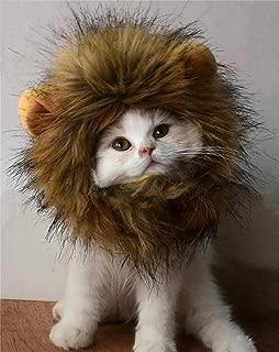 cat with lion mane