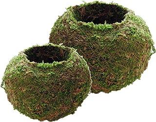 2 Piezas De Estilo Japonés Musgo Natural Bonsai Maceta De Flores, Verde Sphagnum Musgo Sustrato Planta En Maceta Maceta Hidratante, 9 Cm Y 18 Cm