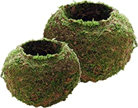 2 Pcs Japanese Style Natural Moss Ball Bonsai Flower Plant Pot, Green Sphagnum Moss Substrate Plant Potted Hydrating Flowerpot, 9cm & 18cm