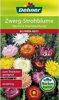 Dehner Blumen-Saatgut, Zwerg-Strohblume Herrliche Prachtmischung, 5er Pack 5 x 1.1 g