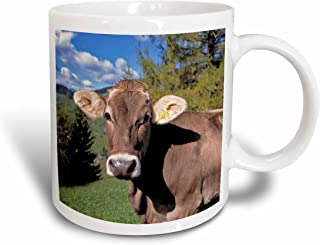 3dRose Italy, Dolomite Alps, Swiss Brown Cow - EU16 RER0140 - RIC Ergenbright - Ceramic Mug, 11-Ounce (Mug_82188_1)