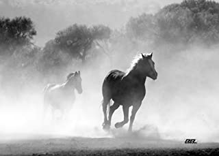 Rogue River Tactical Large Black and White Wild Mustang Horses Running Horse Canvas Print Wall Decor Art Decoration 20x16 Inch