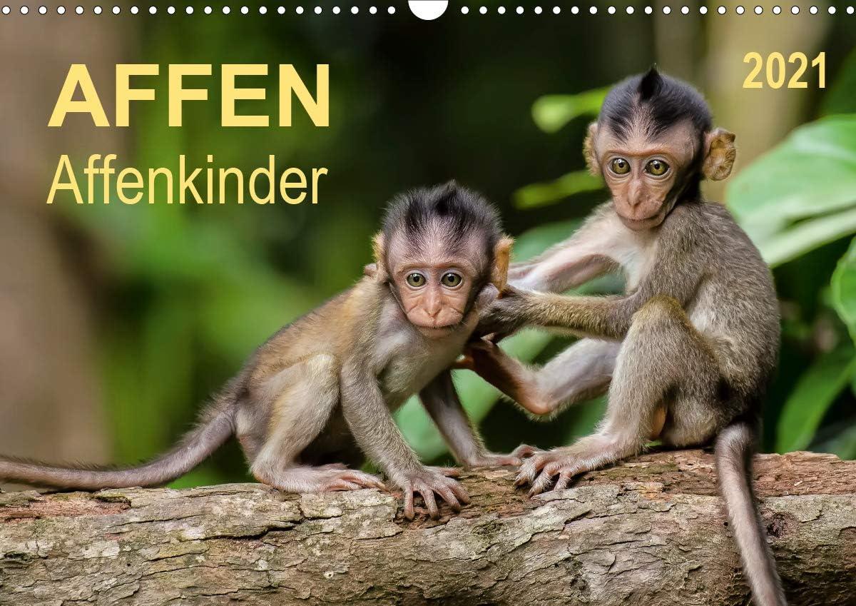 Affen - Affenkinder Wandkalender Max 44% OFF quer A3 Popular products 2021 DIN