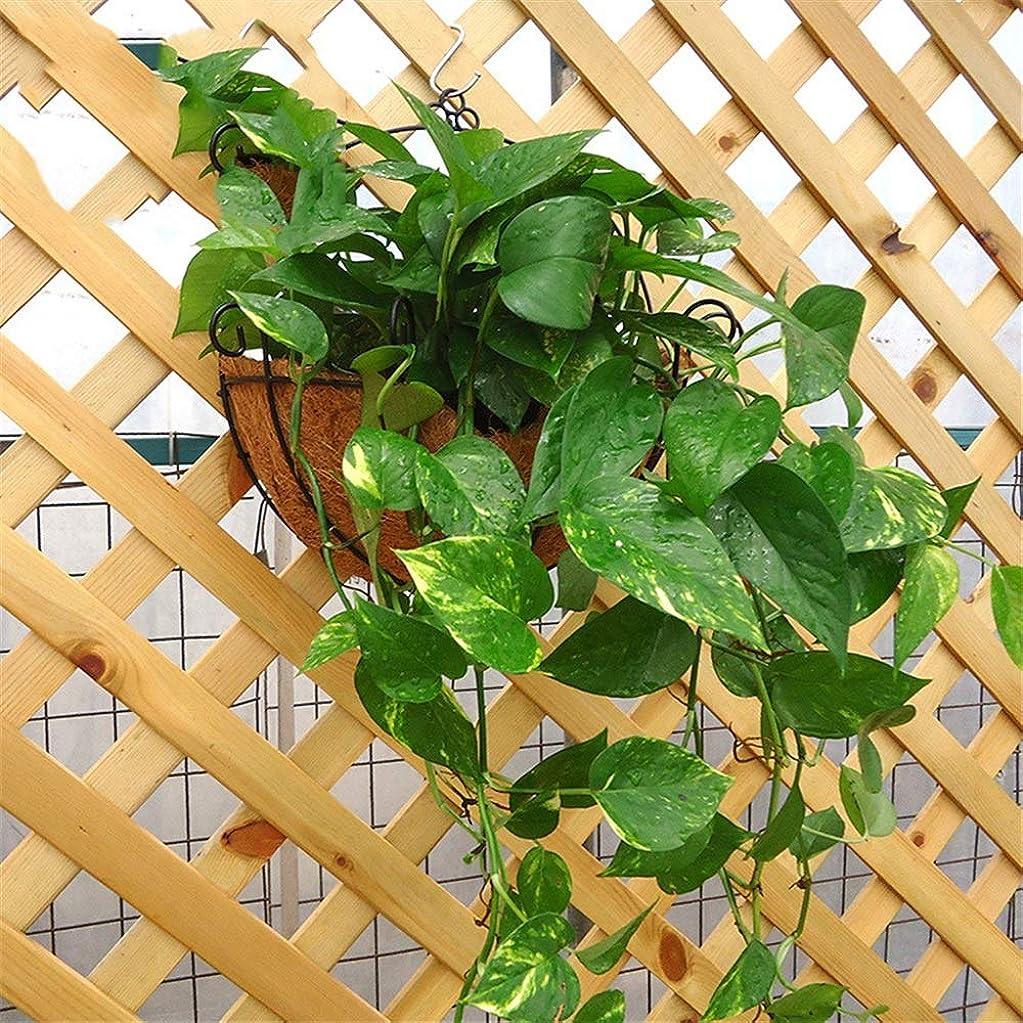 守るカウンタミスペンドハンギングプランター 2つのヤシの鉄鍋に大きな半円壁創造的な緑の鉢植え鉢植え 植物ハンギングバスケット (Color : 2 Picture Color, Size : L-35 x 18cm)
