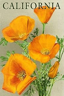 California - Poppies (9x12 Art Print, Wall Decor Travel Poster)
