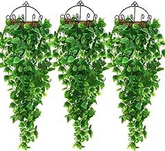 Best plants for a porch Reviews