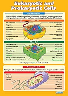 Best eukaryotic cell poster Reviews