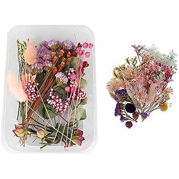 VINFUTUR 30pcs Fleurs S/éch/ées Naturelles Fleur Press/ée Mixte DIY Art Floral Deco Collection Cadeau
