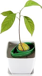 AvoSeedo Bowl Set Grow Your Own Avocado Tree, Evergreen, Perfect Avocado Tree Growing Kit for Every Avocado Lover with Plan Pot – Green & White