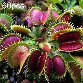 Amazon.es: PLANTAS CARNIVORAS