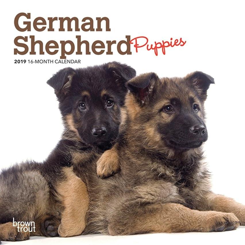 道徳の忌み嫌うメイエラGerman Shepherd Puppies 2019 Calendar