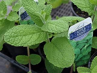 Best apple mint plant Reviews