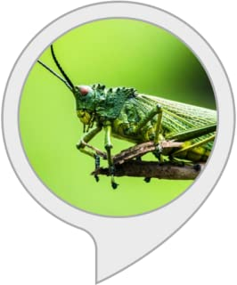 Relaxing soundscapes : Cricket Sounds