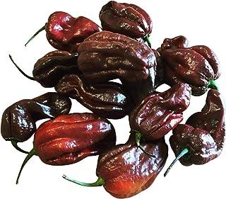 Habanero Chokolate 10 Samen Ultrascharfe und seltene Chili