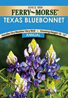 Ferry-Morse 1164 Texas Annual Flower Seeds, Bluebonnet