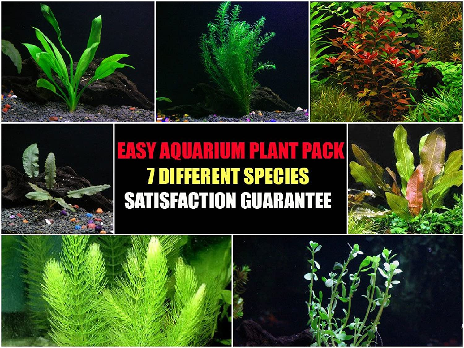 Easy Live Aquarium Plants Package  7 Kinds  Anacharis, Amazon and More