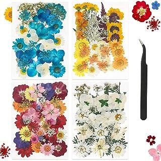 Fleurs Pressées Séchées Fleurs séchées Naturelles Fleurs Séchées à Ongles Multicolores pour résine, Bougie Bricolage, Scra...