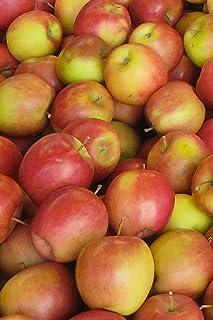 Apple Koru 500g