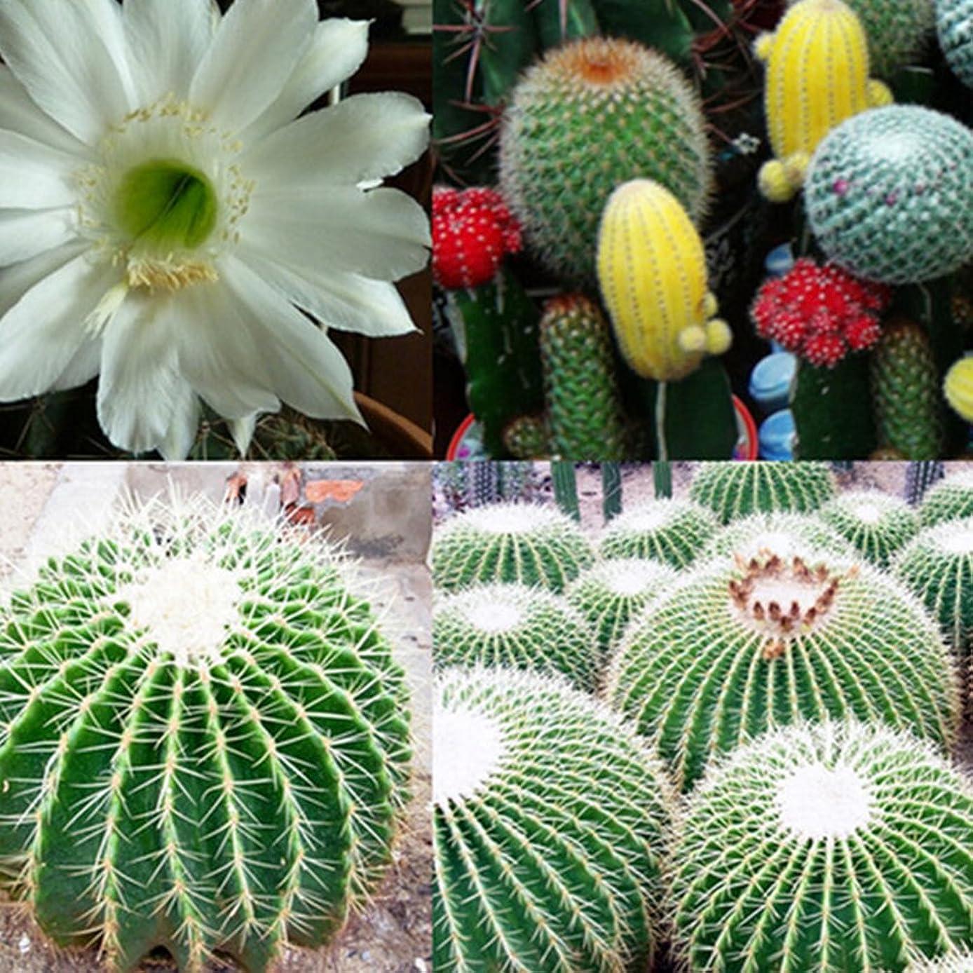 Wintefei 20 Pcs Mixture Color Cactus Flower Plant Beautiful Indoor Outdoor Garden Decor