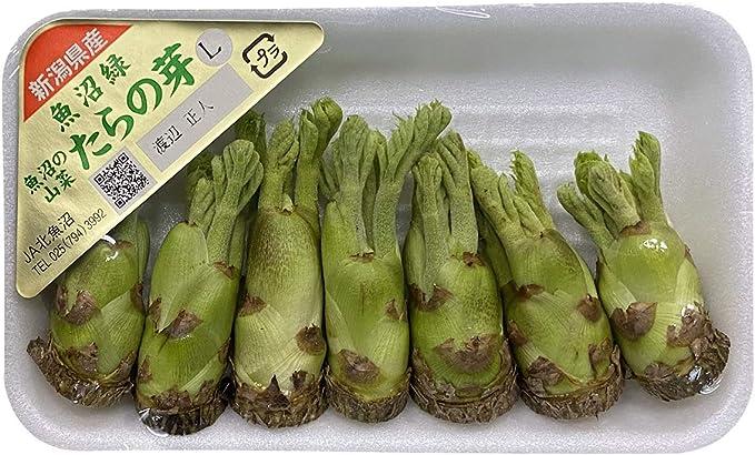 ふかし栽培 タラの芽 タラの木の栽培、タラノ芽、植込み、栽培例、写真集