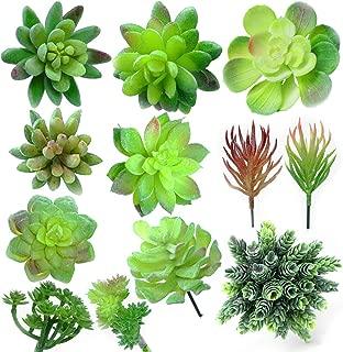 rubber succulents