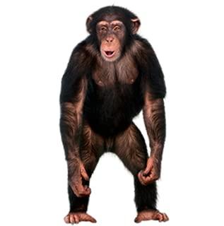 Real Talking Monkey