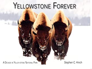 Yellowstone Forever: A Decade in Yellowstone National Park