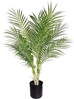 Best mini indoor palm tree Reviews