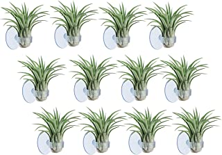 Air Plant Holder,12 Pack Small Plant Holder Container Stand with Suction Cup for Hanging Tillandsia Air Plants House Plant...