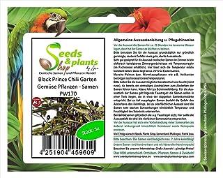 Stk - 5x Black Prince Chili Garten Gemüse Pflanzen - Samen PW170 - Seeds Plants Shop Samenbank Pfullingen Patrik Ipsa