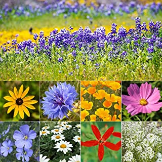 Northeastern Wildflower Seed Mix - 1/4 Pound Covers 500 SQFT (1/4 Pound)