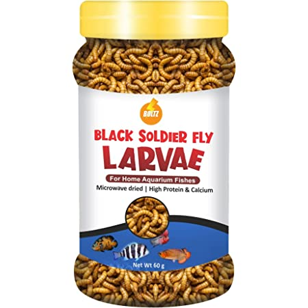 Boltz Black Soldier Fly Larvae Dried Fish Food Treat -60 gm(800+ larave), Natural Food for Aquarium Fishs- High Protein and Calcium