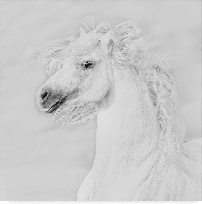 Trademark Fine Art Black and White Horses III by PHBurchett, 14x14